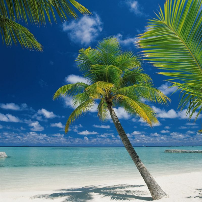 Playa Palmeras 4883
