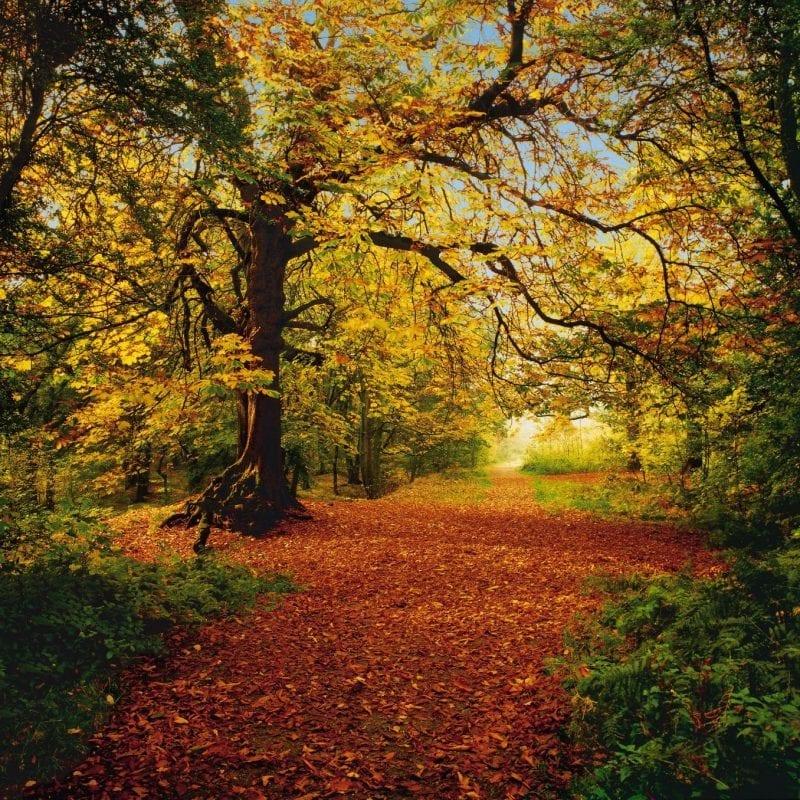 Bosque Otoño 8068
