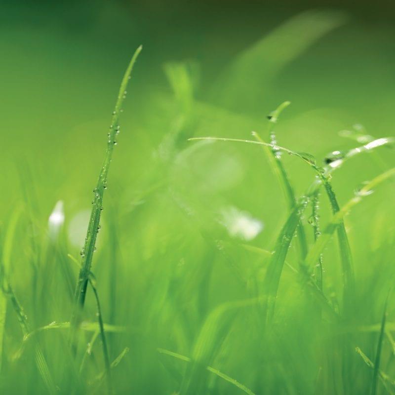 Pasto verde 8886