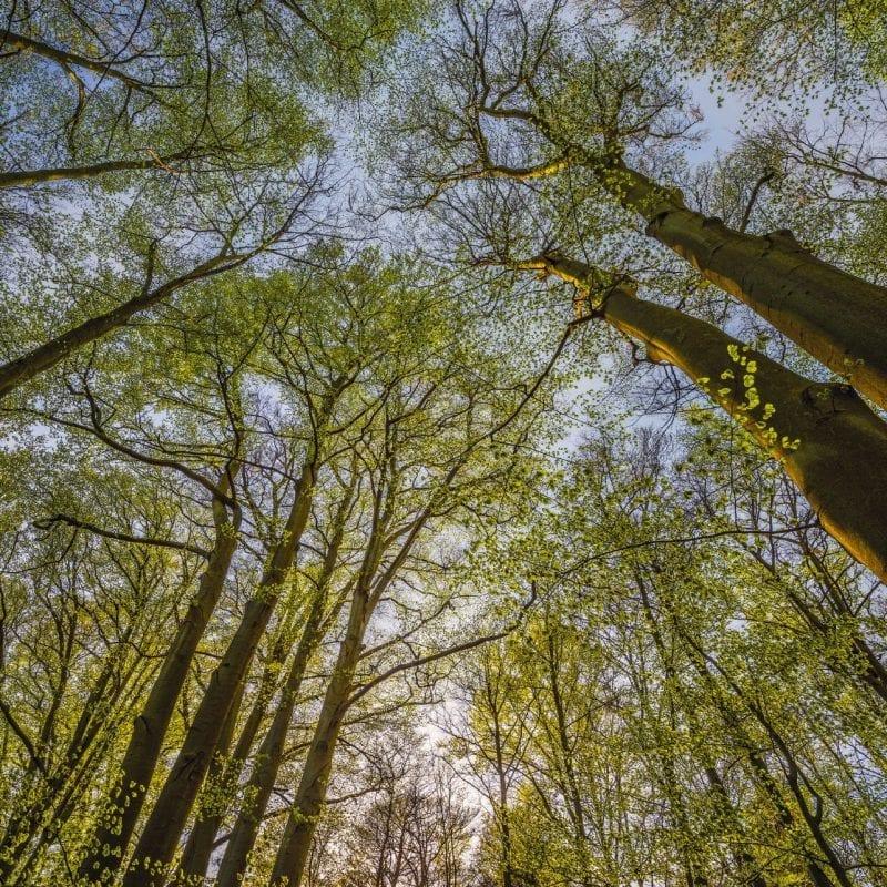 Fotomural árboles Canopy 4522 Komar