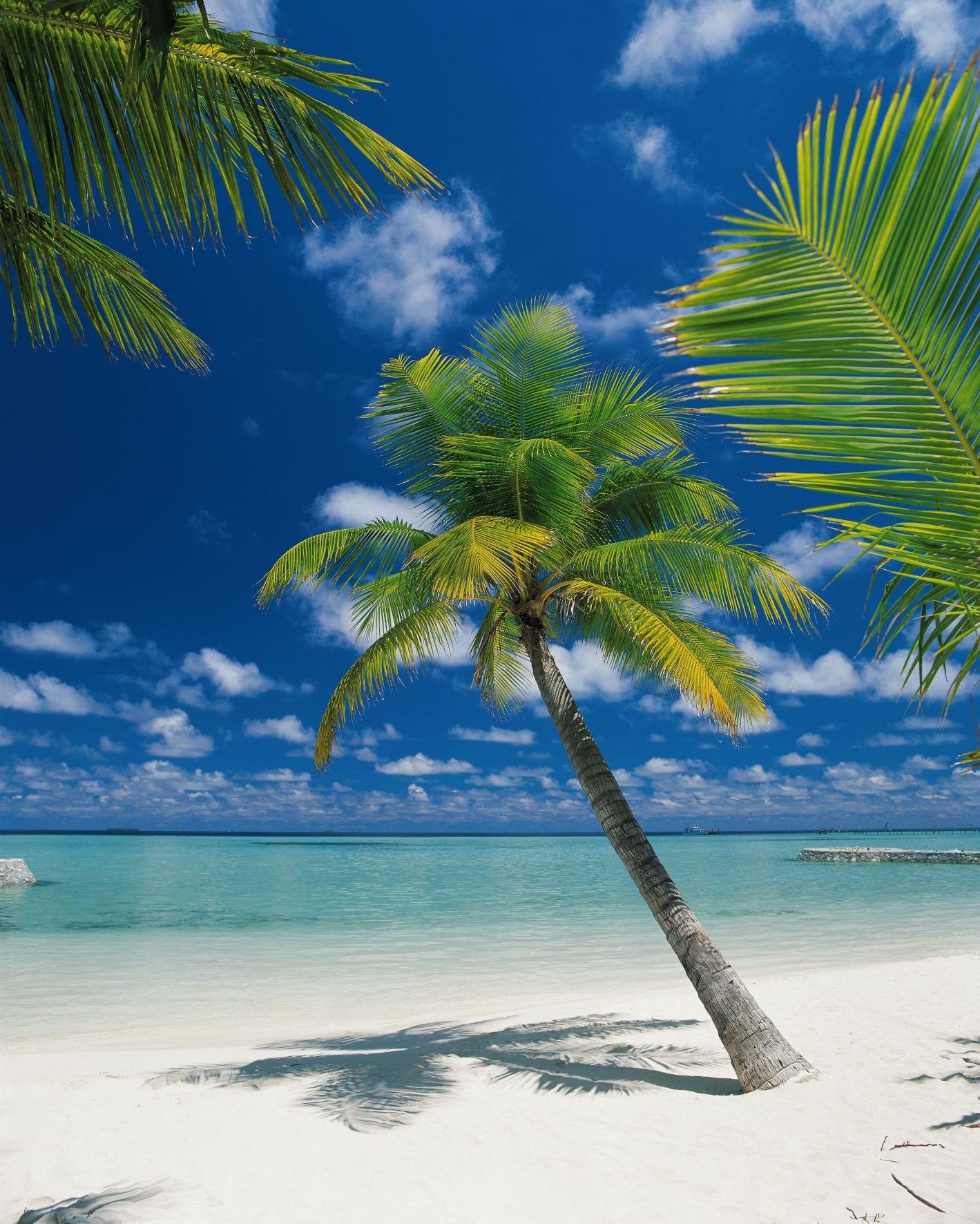 Fotomural Playa palmeras 4883 Komar