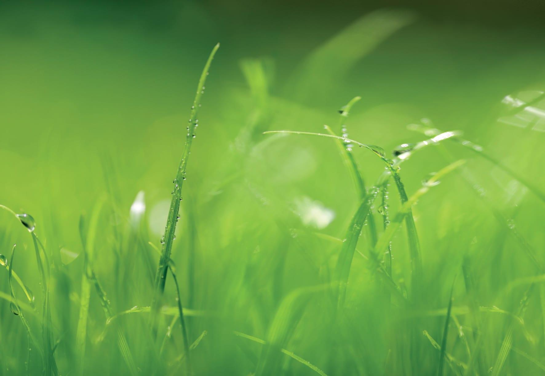 Fotomural Pasto verde 8886 Komar