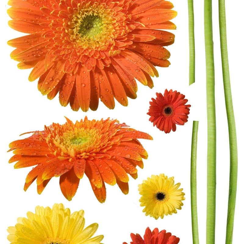 Wallsticker flor gerberas 1551-1 Decolife Muresco