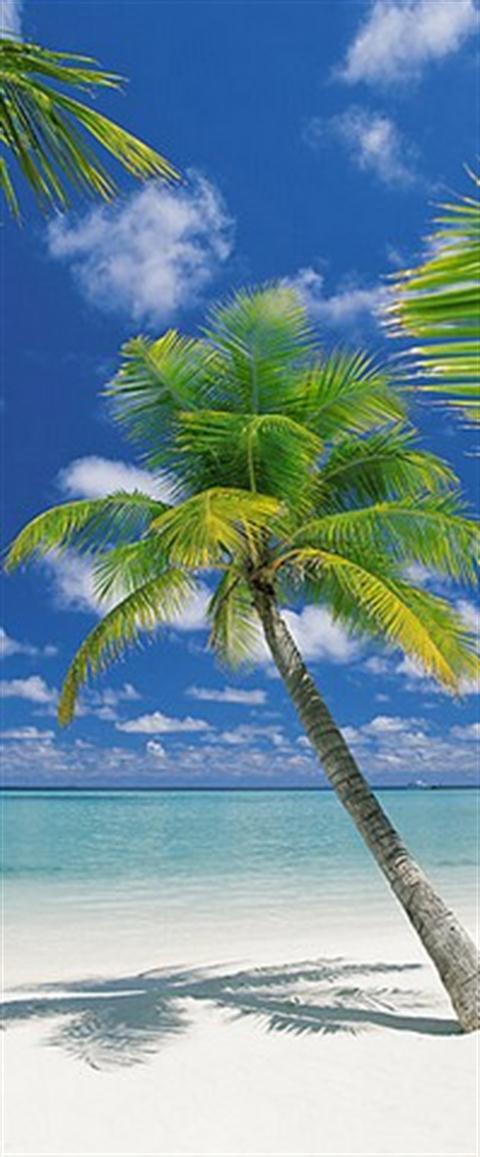 Fotomural Playa palmera 21883 Komar