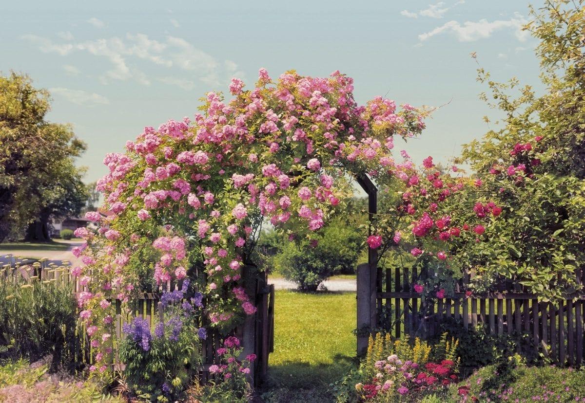 Fotomural Jardín de Rosas 8936 Komar